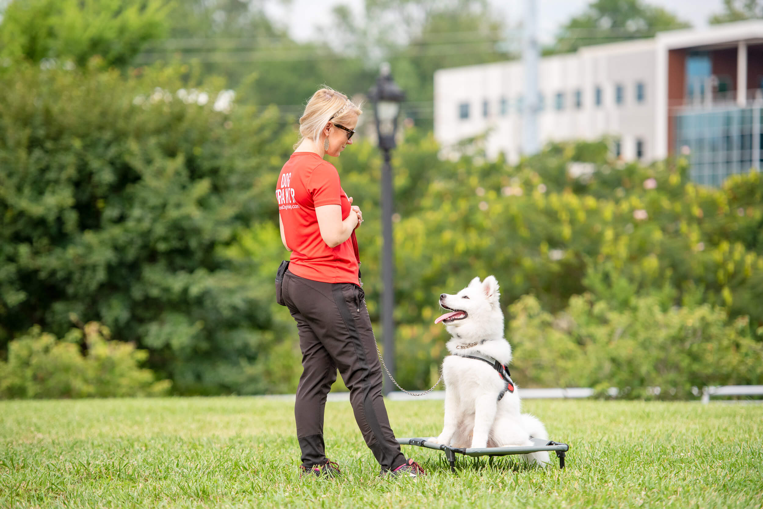White dog participating in an adult dog training class outside in Charlotte, NC