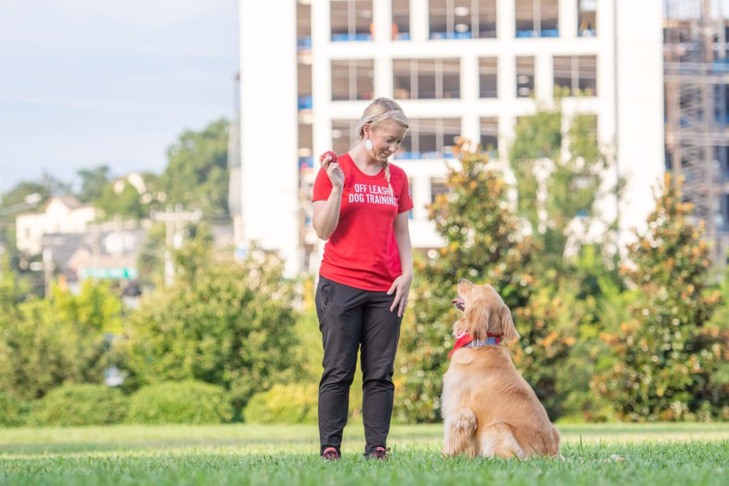 Golden retriever sitting outside in the grass with Charlotte dog trainer.