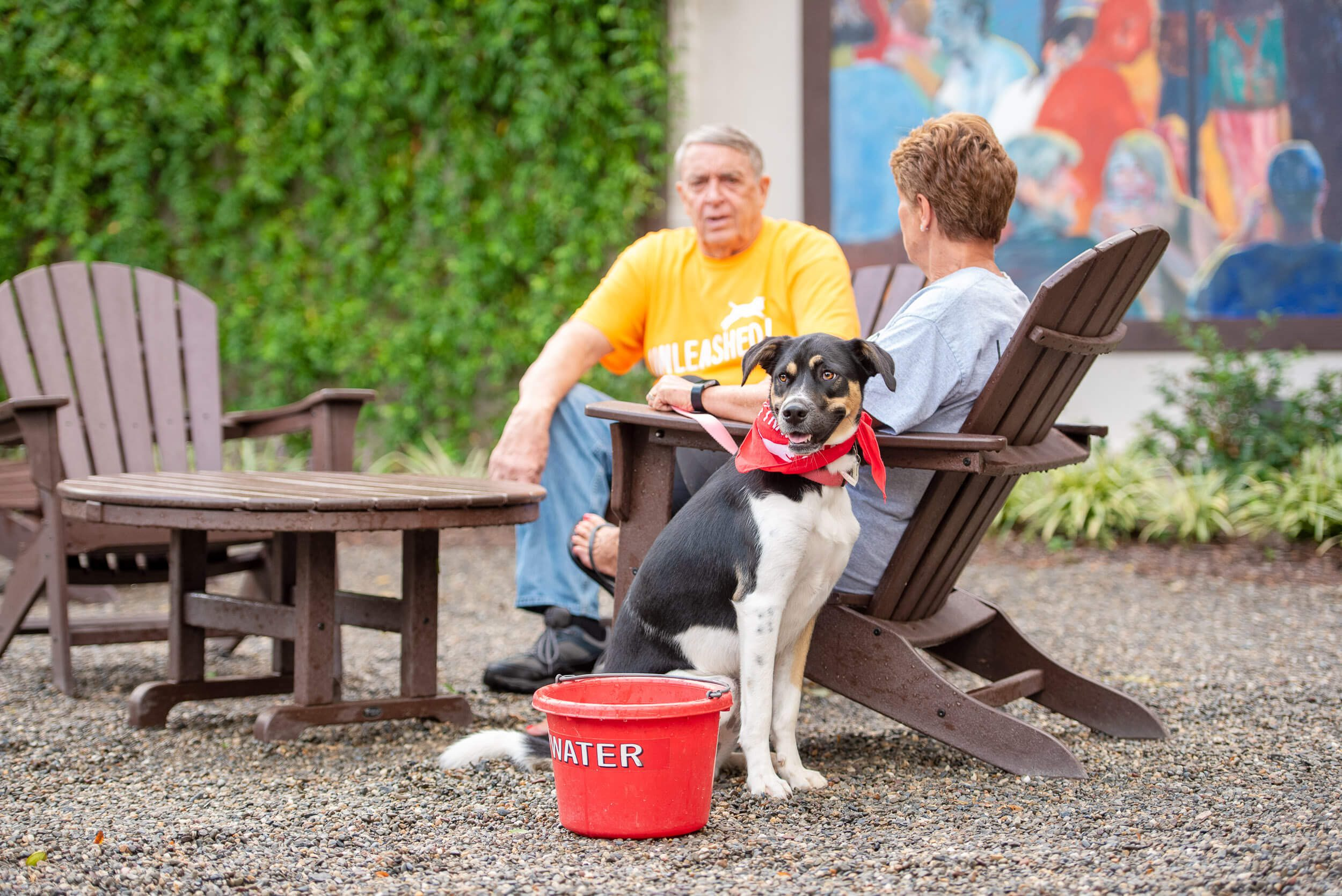 Black, White & Brown adult dog relaxing with owners at a #redbucketclub partner location in Charlotte