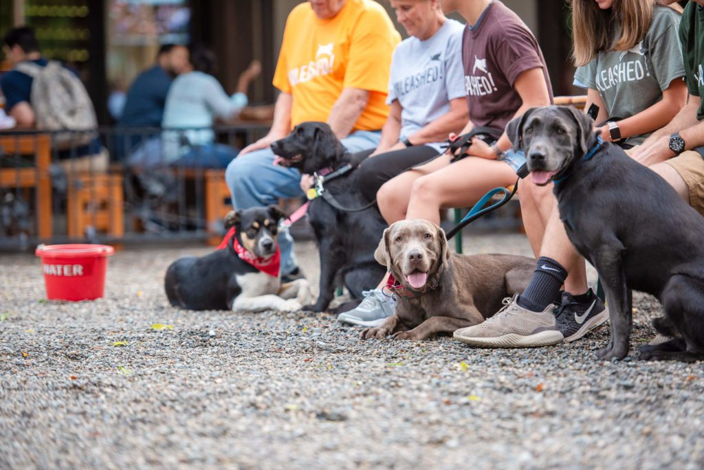 4 dogs sitting outside a #redbucketclub member restaurant during group dog training.