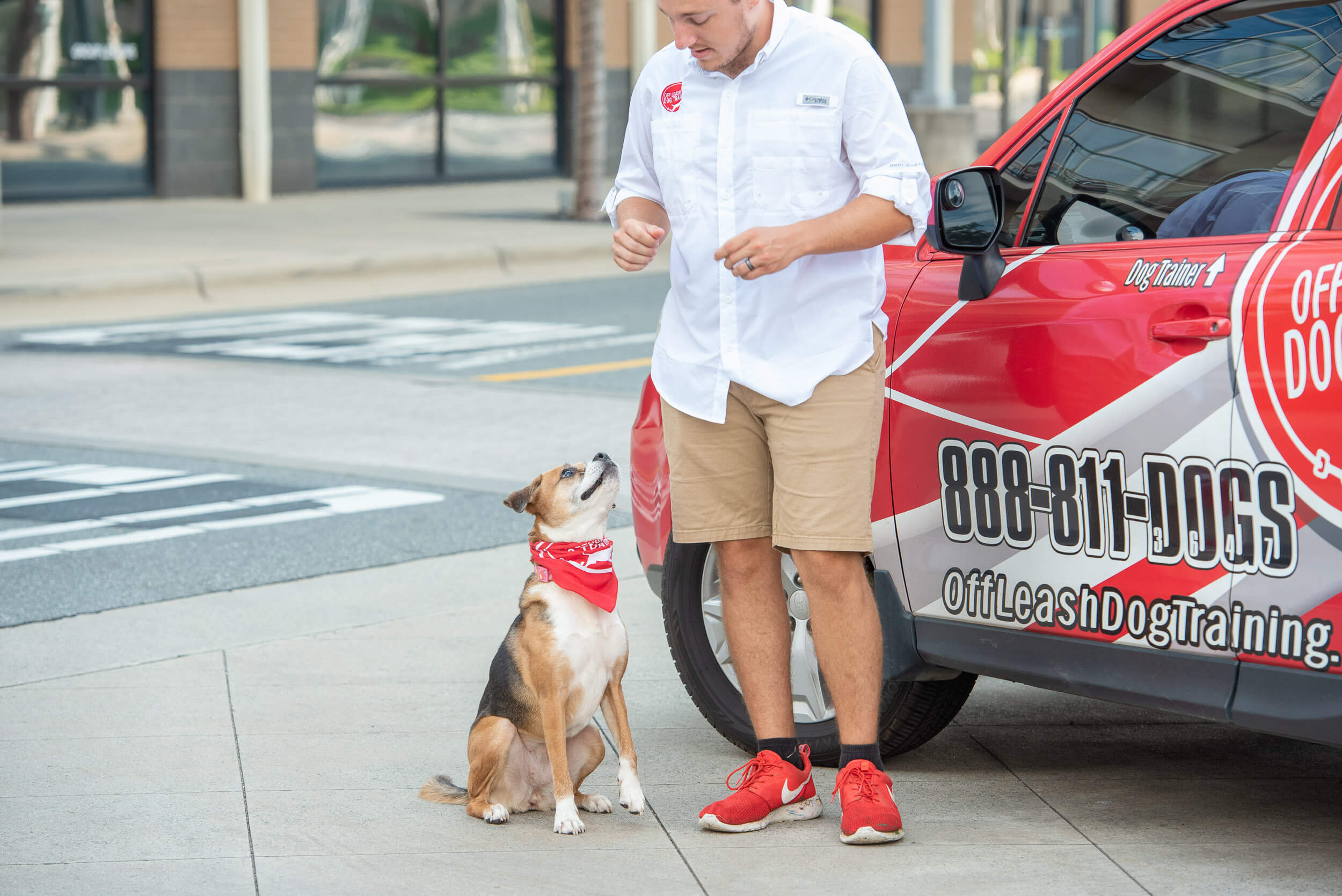 Charlotte dog trainer working with small brown and white dog next to Off Leash Dog Training car